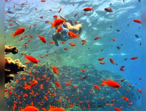 Лучшие рифы Шарм - Эль - Шейха